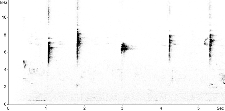 Sonogram of Hawfinch song