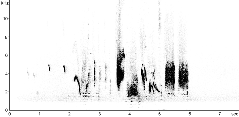 Sonogram of Isabelline Wheatear song