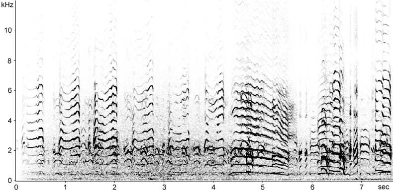 Sonogram of Kittiwake calls