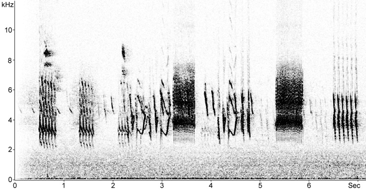 Sonogram of Lesser Redpoll songs and calls