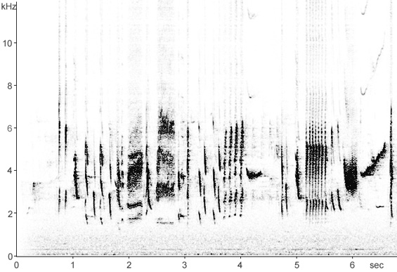 Sonogram of Linnet song