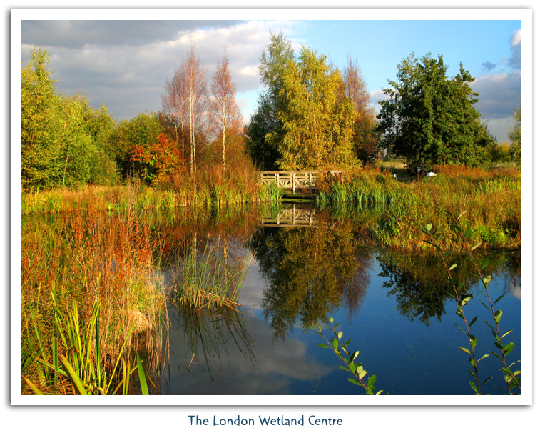 London Wetland Centre � 2007 Fraser Simpson