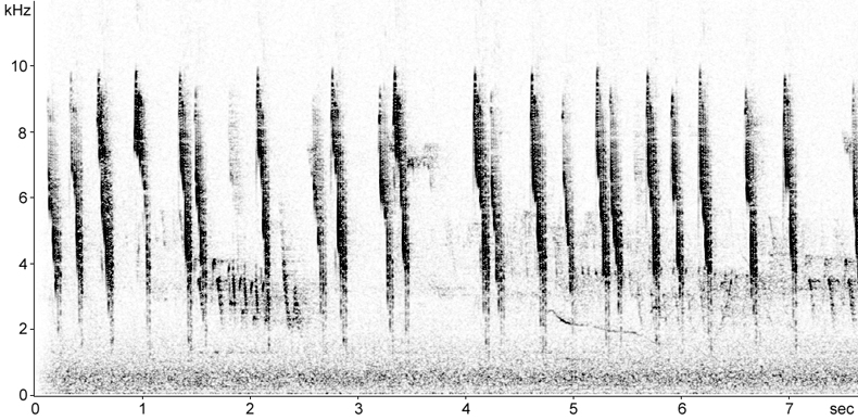 Sonogram of Long-tailed Tit calls