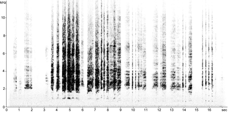 Sonogram of Monk Parakeet calls