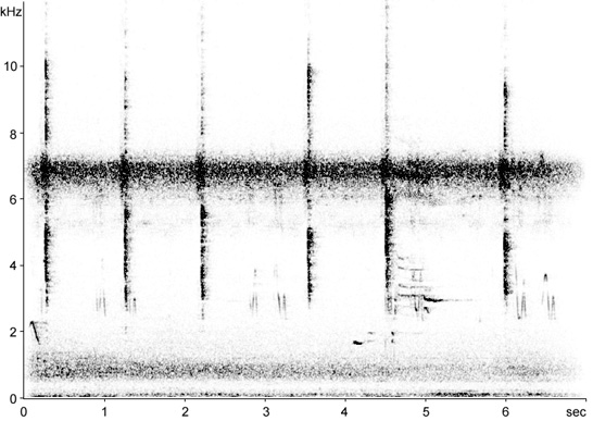 Sonogram of Florida Prairie Warbler call