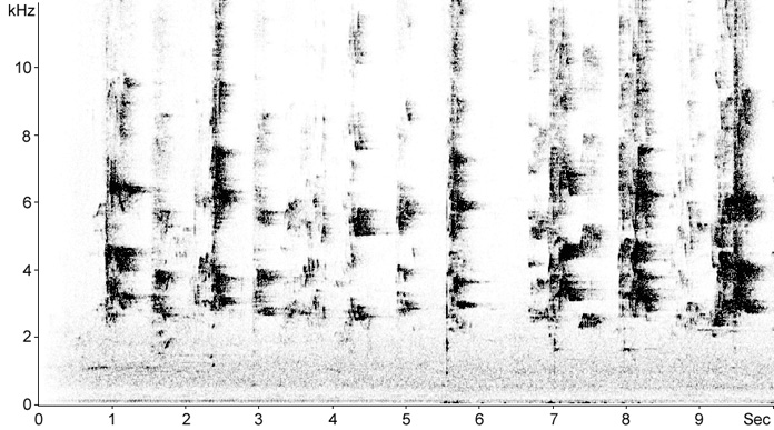 Sonogram of Rainbow Lorikeet calls