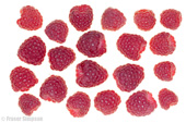 Perthshire Raspberries