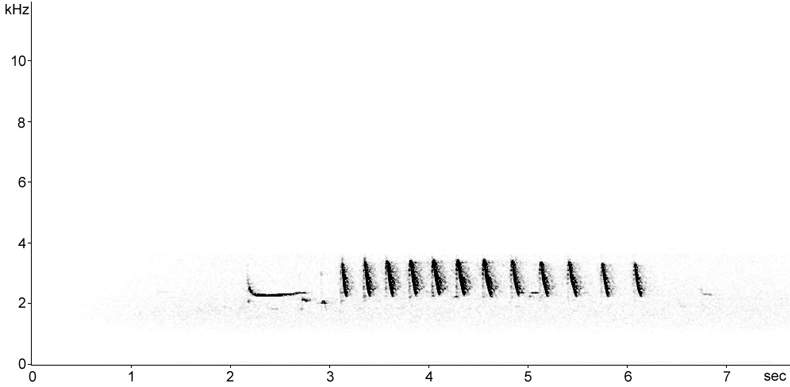 Sonogram of Redshank calls at night
