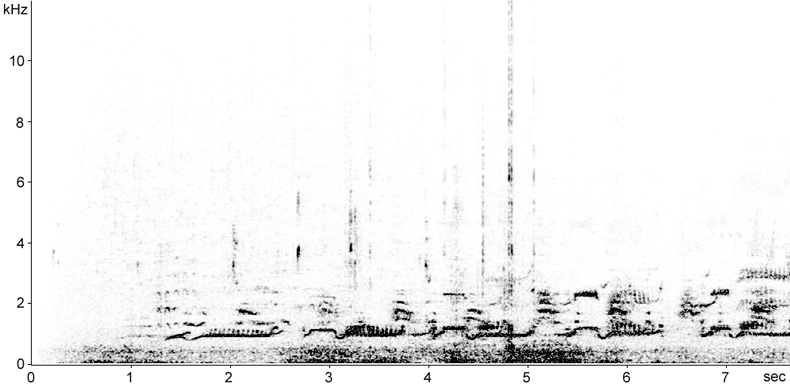 Sonogram of Red-throated Diver duetting song