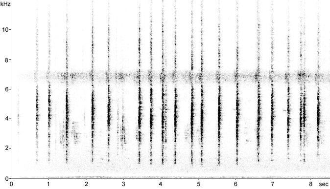 Sonogram of a Red-winged Blackbird brood calls