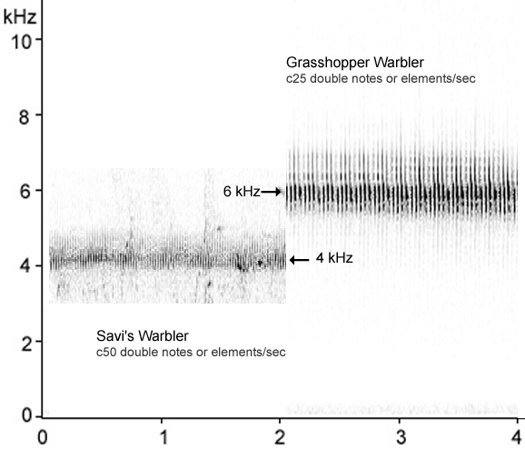 Sonogram comparing Savi's & Grasshopper Warbler song