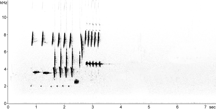 Sonogram of Song Sparrow song