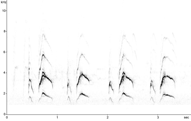 Sonogram of Song Thrush song