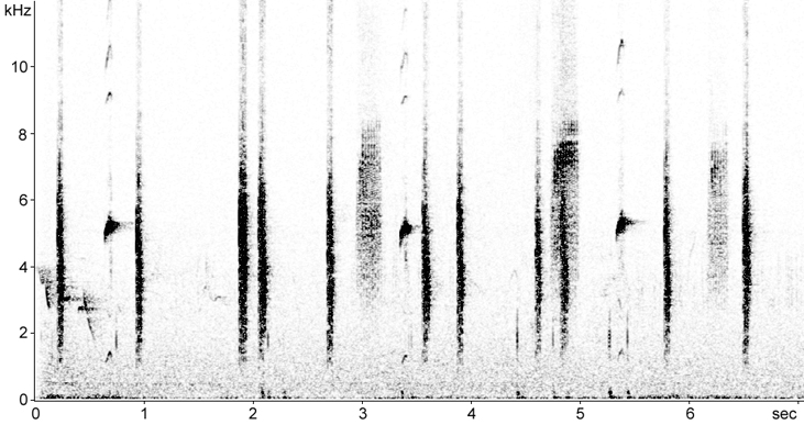 Sonogram of female Stonechat and juvenile calls