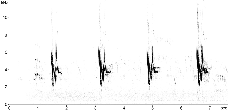 Sonogram of Tawny Pipit song