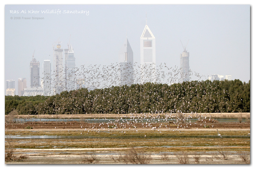 Waders at Ras al Khor Wildlife Sanctuary � Fraser Simpson