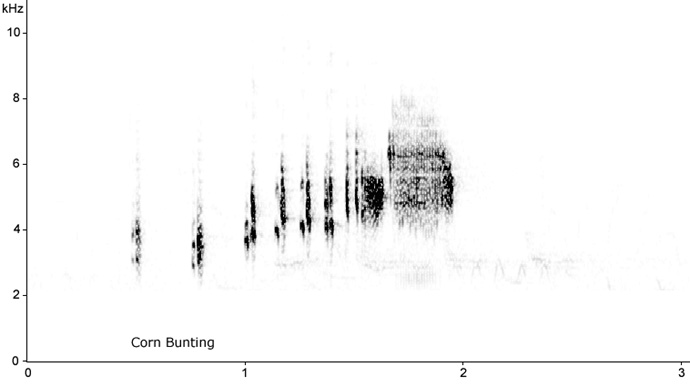 Sonogram of Whinchat song