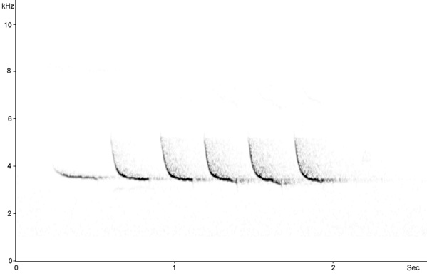 Sonogram of Wood Warbler song