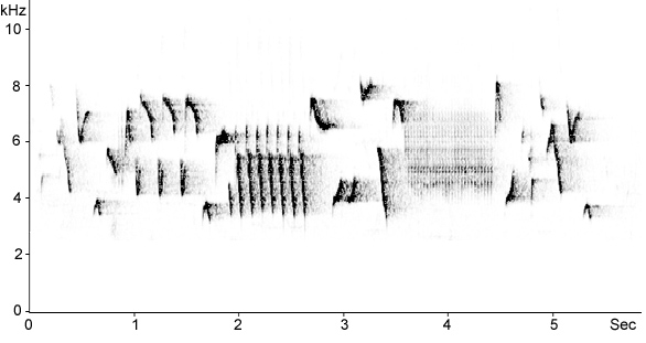 Sonogram of Eurasian Wren song